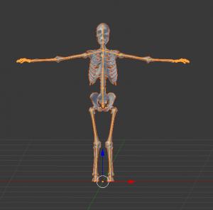 人体骨格Humanoid/Blender