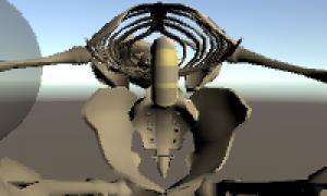 【Blender】UnityのHumanoidに設定するとアニメーションで骨盤だけが動かない件